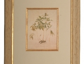 Botanical prints custom framed for you by Framed in The Village, Oklahoma City